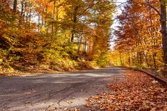 Autumn road with fallen rusty leaves Royalty Free Stock Photo