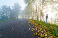 Autumn, road, fog, foliage Stock Images