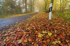 Autumn, road, fog, foliage. Road in autumn with fog and foliage royalty free stock images