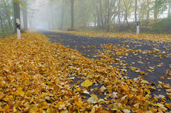 Autumn, road, fog, foliage. Road in autumn with fog and foliage stock images