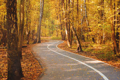 Autumn road with a folige. Autumn road with a folige in a forest Royalty Free Stock Photography