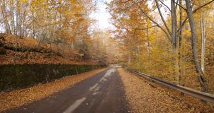 Autumn road forest Royalty Free Stock Photos