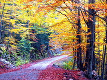 Autumn road in forest Royalty Free Stock Images