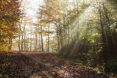 Autumn road through the forest with bright side sun rays Royalty Free Stock Photography