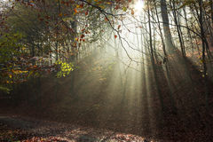 Autumn road through the forest with bright side sun rays Royalty Free Stock Images