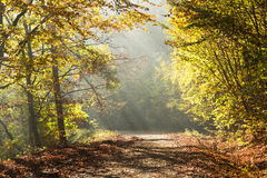 Autumn road through the forest with bright side sun rays Royalty Free Stock Image