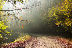 Autumn road through the forest with bright side sun rays Stock Photo