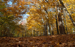 Autumn road in a forest Stock Photos