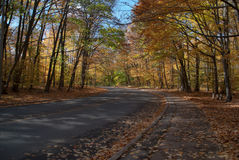 Autumn road in a forest Royalty Free Stock Image
