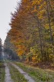A forest road through an autumn forest royalty free stock photography