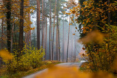 Autumn road in the forest Royalty Free Stock Photos