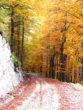 Autumn road in forest Stock Photo