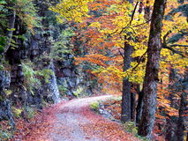 Autumn road in forest Royalty Free Stock Photo