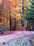 Autumn road in forest Stock Photos