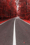 Autumn road through the forest Royalty Free Stock Photos