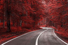 Autumn road through the forest Royalty Free Stock Image