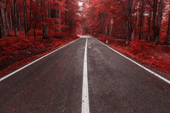 Autumn road through the forest Stock Photography