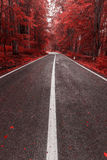Autumn road through the forest Royalty Free Stock Images