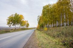 Autumn road, going away, past birches with yellow foliage. Autumn road, going away, among the yellow trees. Krasnoyarsk Territory. Russia. Siberia Royalty Free Stock Photo