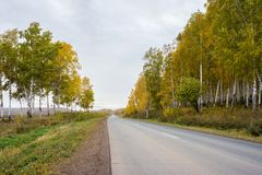 Autumn road, going away, among the yellow trees. Autumn road, going away, past birches with yellow foliage. Krasnoyarsk Territory. Russia. Siberia Royalty Free Stock Photo