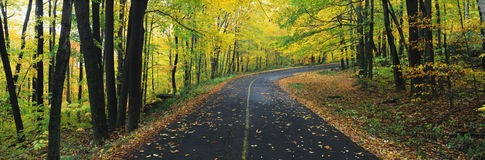 Autumn road in Greylock State Reservation, MA Royalty Free Stock Image