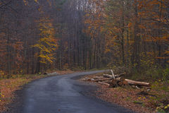 Autumn Road and Harvested Trees Royalty Free Stock Image