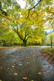 Autumn road heading into part Royalty Free Stock Images