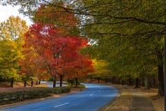 Autumn Road i Georgia Fotografering för Bildbyråer