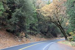 Autumn Road i Yosemite arkivfoto