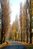 Autumn road at Lake Balaton Royalty Free Stock Images