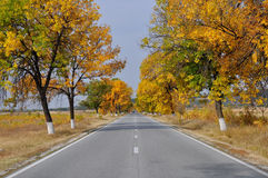 Autumn road. Autumn landscape of a road Royalty Free Stock Photography