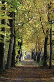 Autumn forrest road. Road in a beautiful colored autumn landscape Royalty Free Stock Image