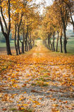 Autumn road. With leaves and trees Stock Image