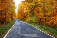 Autumn Road Mood royalty free stock image