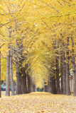 Autumn road in morning Stock Photography