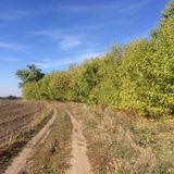 Autumn road near the plantations. Clear sky royalty free stock image