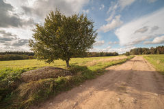Autumn road on an oblique field with one tree Stock Photos