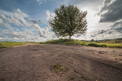Autumn road on an oblique field with one tree Stock Photography