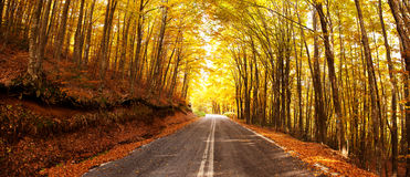 Autumn road panorama Royalty Free Stock Photo
