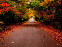 Autumn road in the park Stock Image