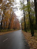 Autumn road. In the park. autumn as always unique Royalty Free Stock Photo