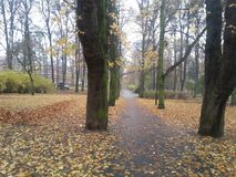 Autumn road through the park. The road leading through the park, covered with leaves that fell from the old trees that grow next to it Royalty Free Stock Photography