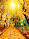 Autumn road in the park. Strewn with leaves royalty free stock photography