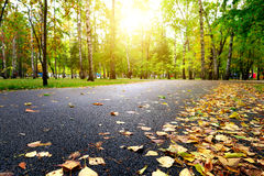 Autumn Road in the Park Royalty Free Stock Images