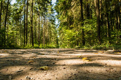 Autumn road in the pine forest Stock Photo