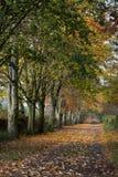 Autumn Road Portrait Stock Photo
