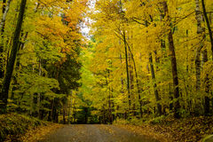 Autumn road, potawanomi state park Stock Photo