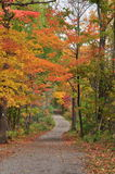 Autumn Road. A roadway off a hiking trail Stock Photos