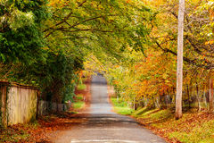 Autumn road scenery. Picture depicting the autumn season in the Blue mountains national park in New South Wales, Australia.  The tree leaves are turning into a Stock Images