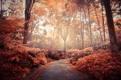 Autumn road in Singapore Botanical Gardens Royalty Free Stock Photography